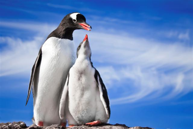 Penguins in Antarctica (Photo: Getty Images)