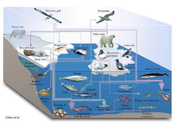 Food Chain Definition. ocean food chain diagram.