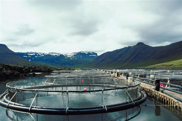 Aquaculture farm in the Arctic