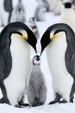 Penguins in Antarctica (Photo: GettyImages)
